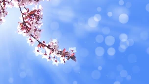 pozadí s pobočkou Třešňové květy