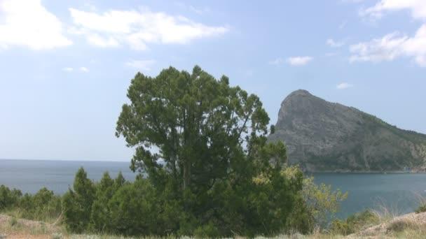 Pine, sky, sea, mountains