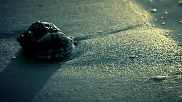 Night. Seashell on the beach.
