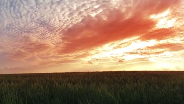 Solnedgång över vete fält