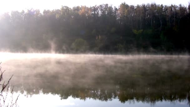 lesní rybník. ráno