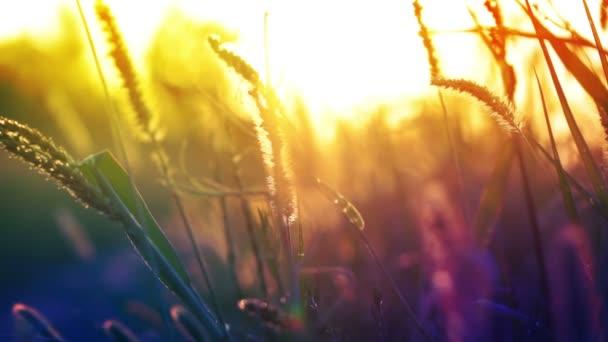 pozadí s trávou a slunce