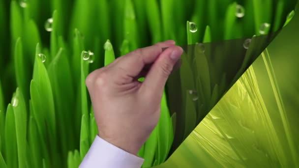 Zemědělství: 4 fáze růstu biopotravin