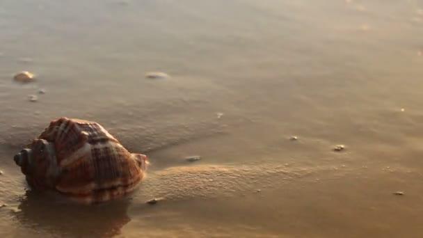 Seashell on the golden sand