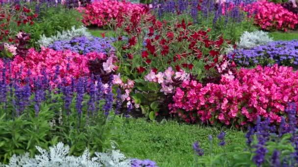 záhonu s různými květy