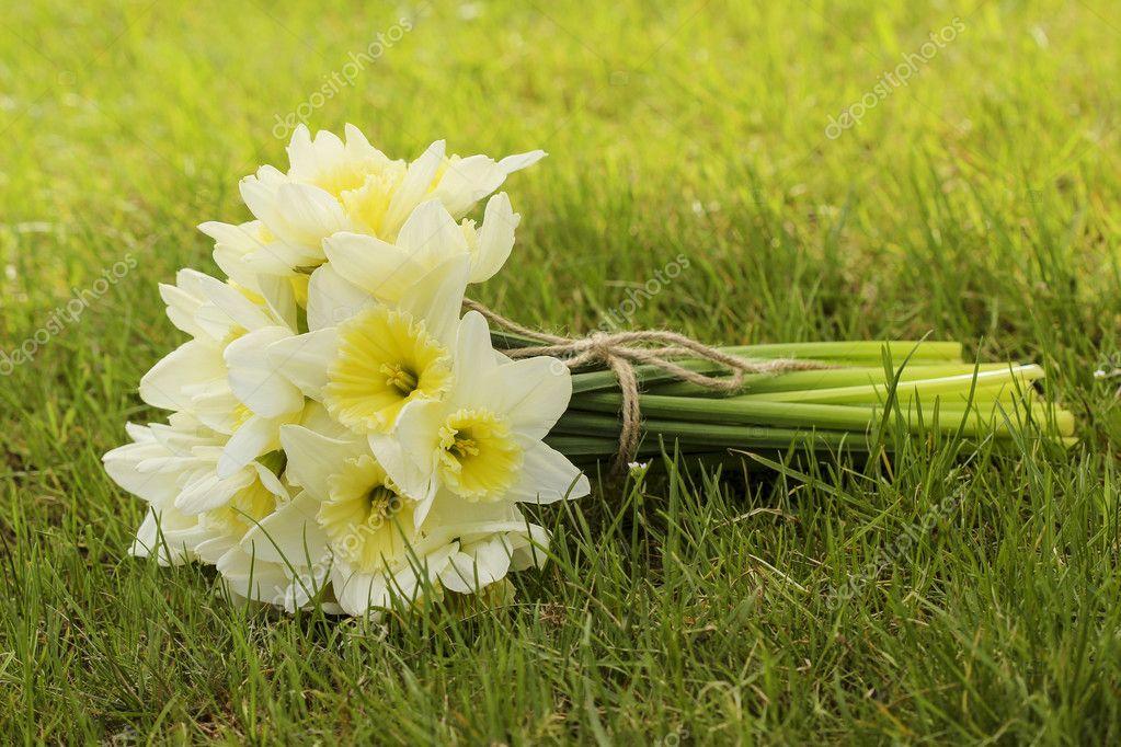 bouquet de jonquilles sur l'herbe verte fraîche. symbole du