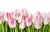 krásné růžové a bílé tulipány na dřevěné pozadí. Kopírovat prostor