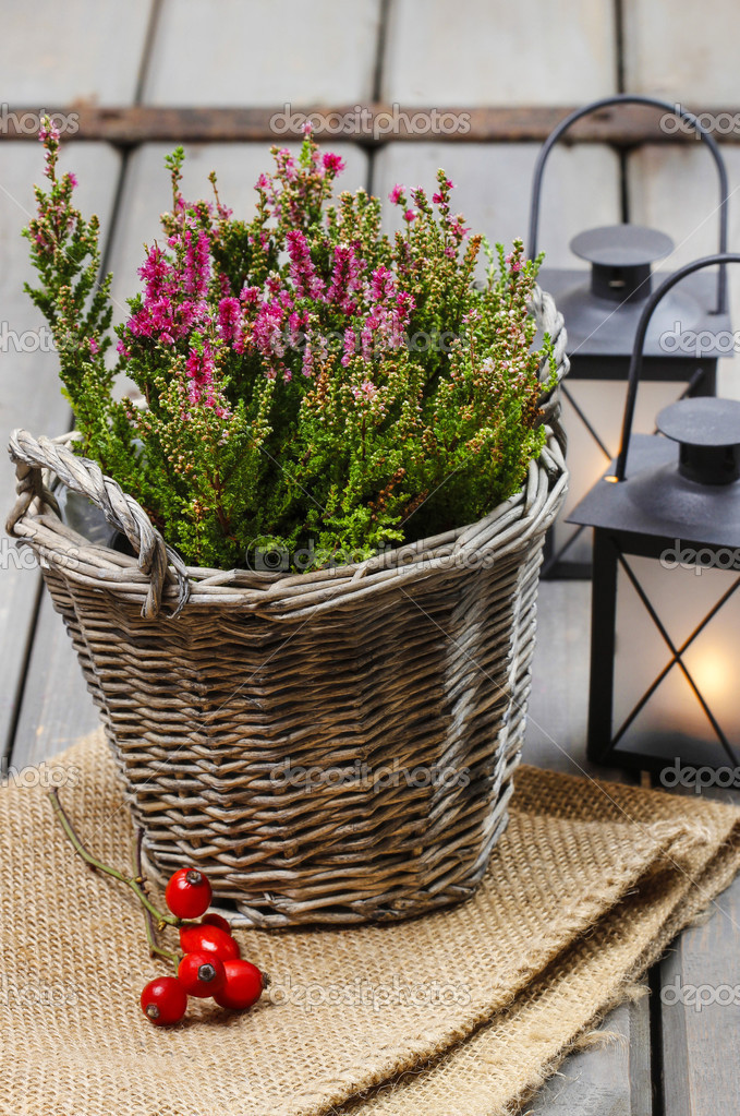 Red Heather In Wicker Basket And Lanterns On Wooden Table Autu
