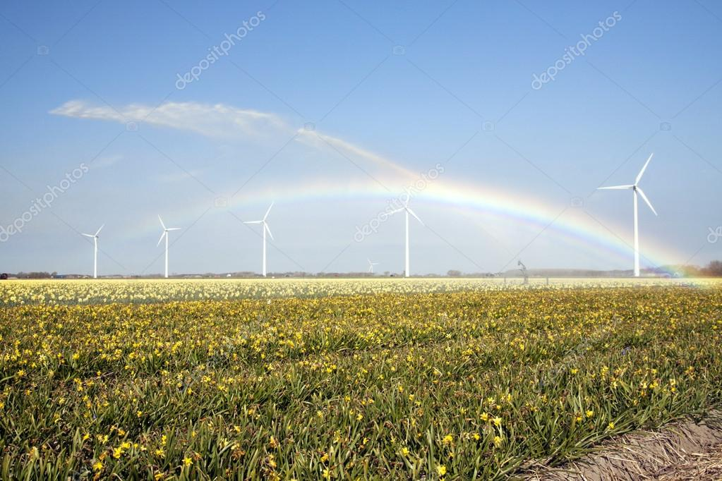 Yellow daffodils and rainbow. Royalty Free Stock Photo Download a Comp Save to Lightbox Yellow daffodils and rainbow