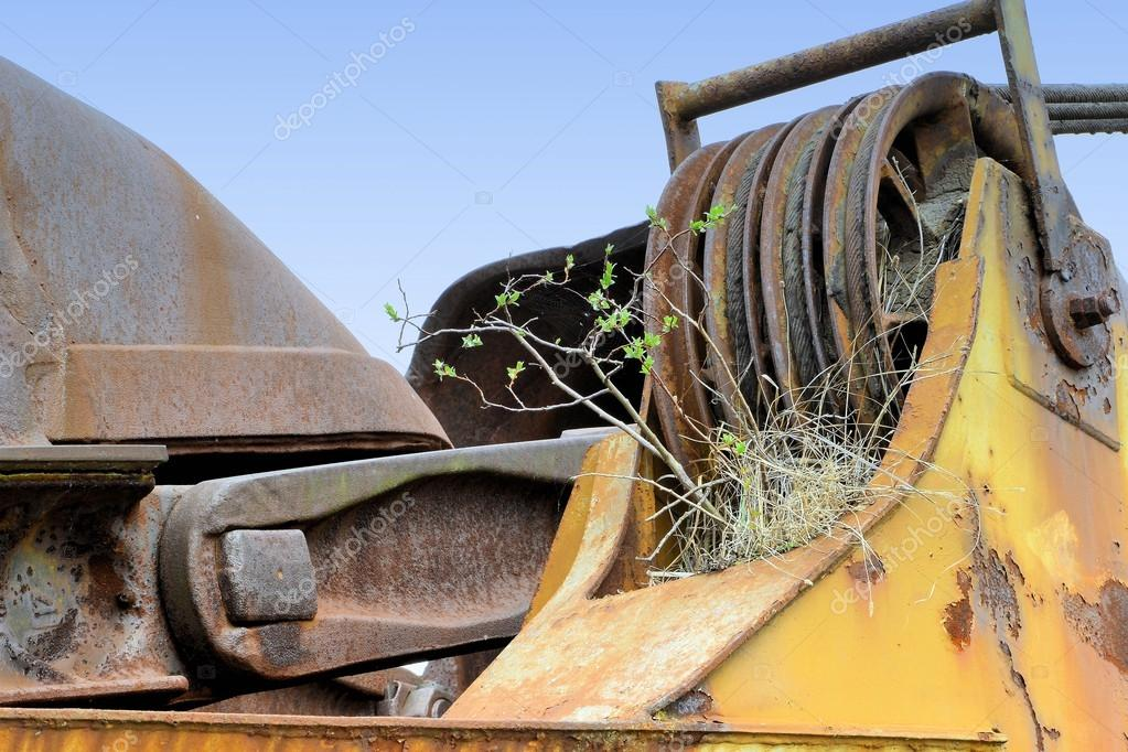 a plant growing on an old coal excavator in an open pit mining