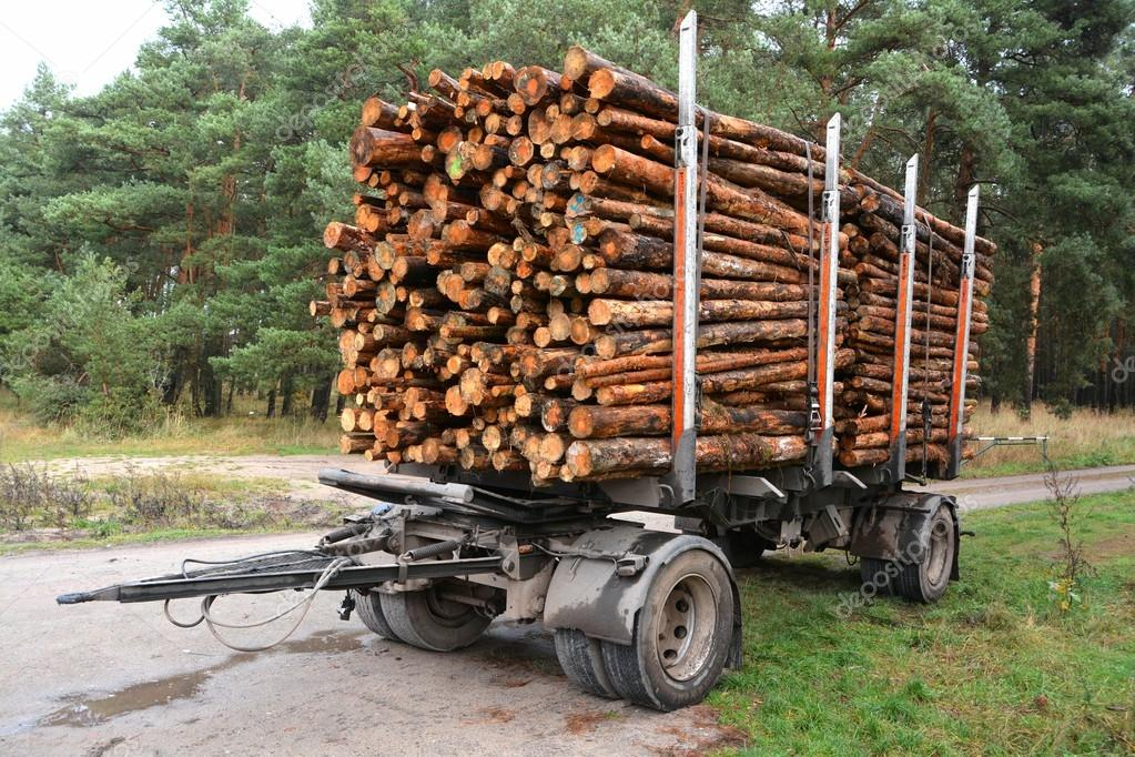 Sawed-off tree trunks are ready for transport