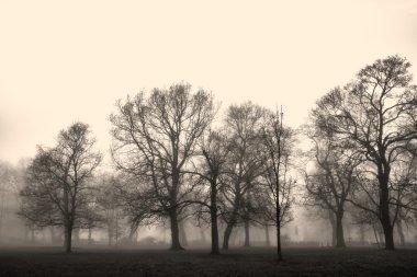 Autumn landscape engulfed in fog