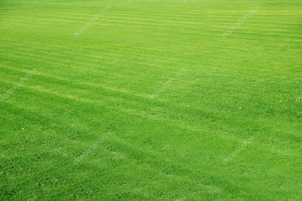 Mowed football ground green lawn background stock photo susazoom 26250295 - Different type de gazon ...