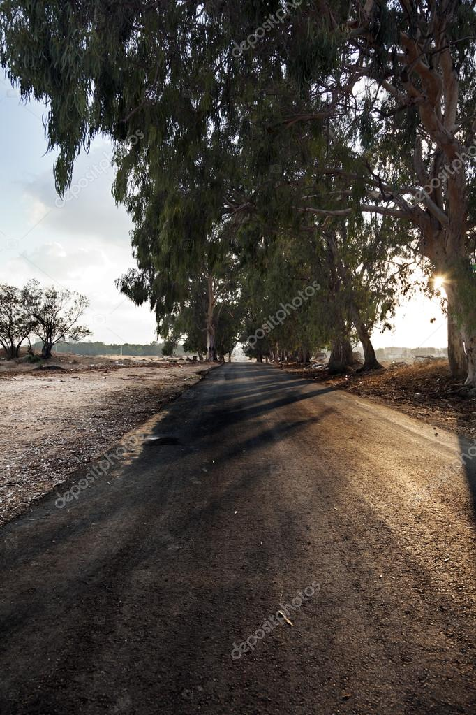 Afternoon Country Road