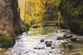 autunno canyon Galbena