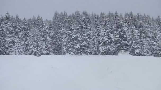 osamělý muž sněžné skútry v prašném sněhu