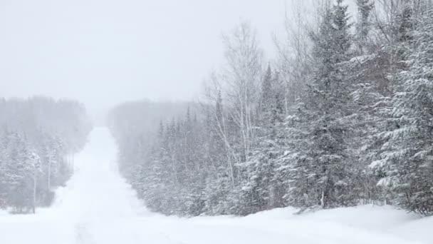 velké sněhové vločky padají během zimního dne