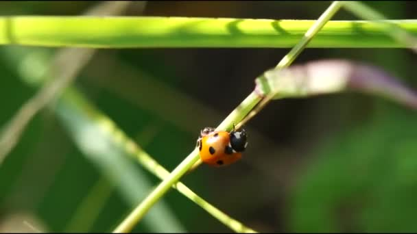 Ants and Ladybird on wild nature