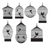 Fotografia gabbie per uccelli