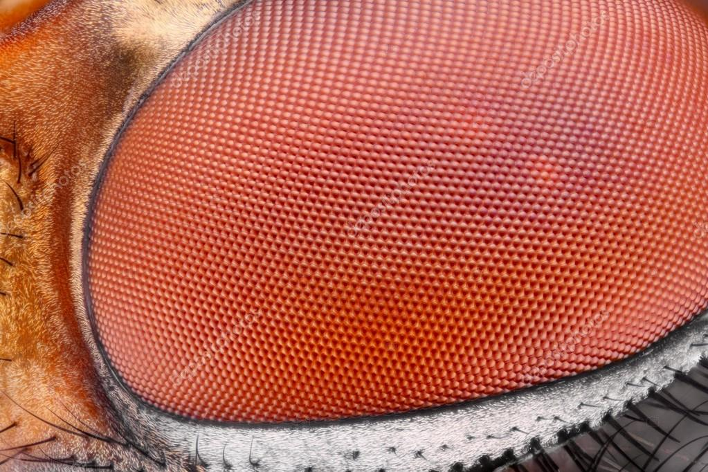 Extreme sharp and detailed fly compound eye surface at