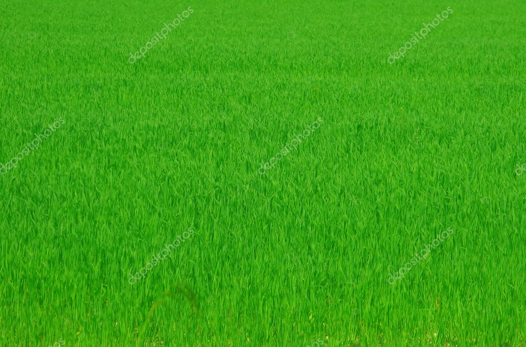 Green gras background — Stock ...