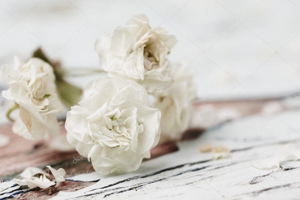 kleine weiße blume — Stockfoto © Forgiss #31083165