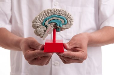 Young doctor with brain model in his hands