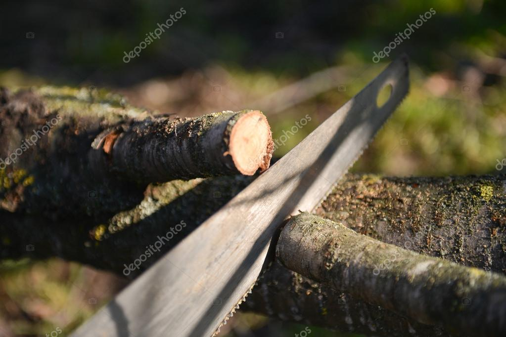 man cutting the branch of a tree with a saw. Spring cleaning of