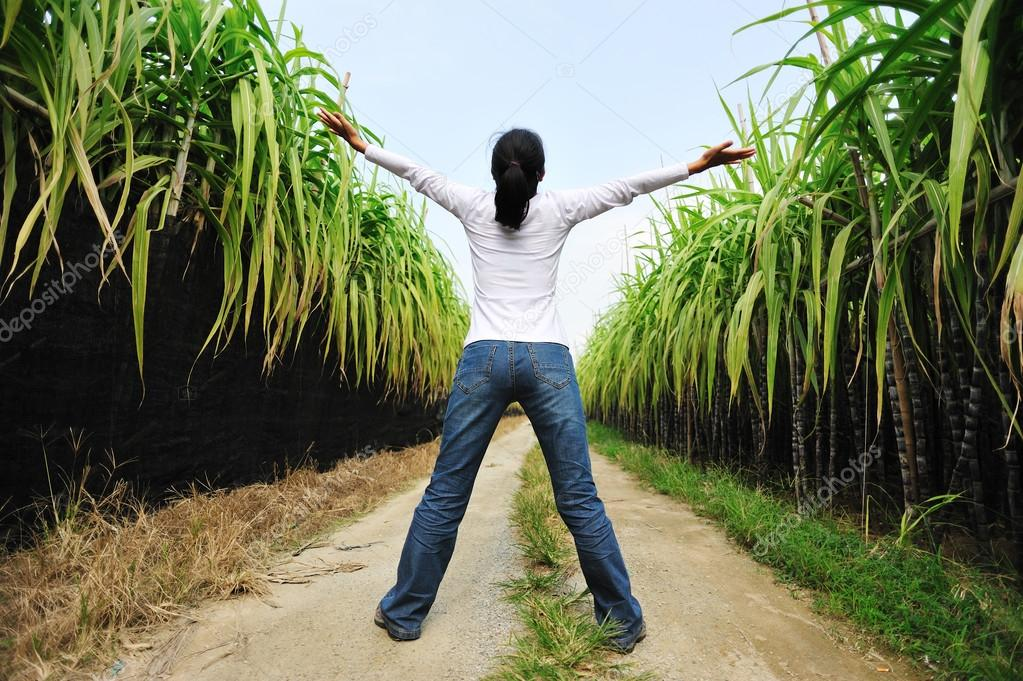 Back of woman in sugarcane field