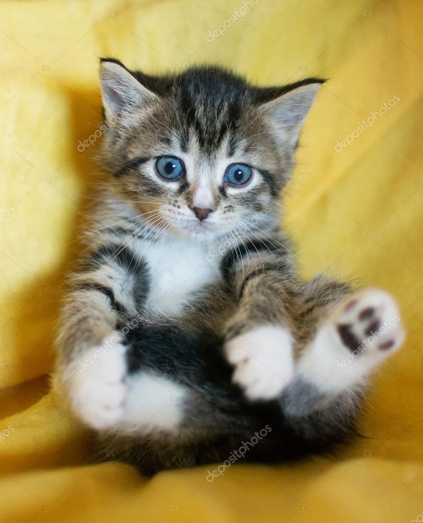 kattunge blå ögon
