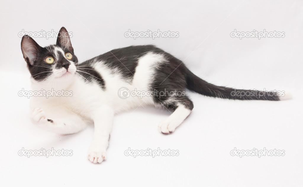 Witte Kat Met Zwarte Vlekken En Gele Ogen Is Het Maken Van Een