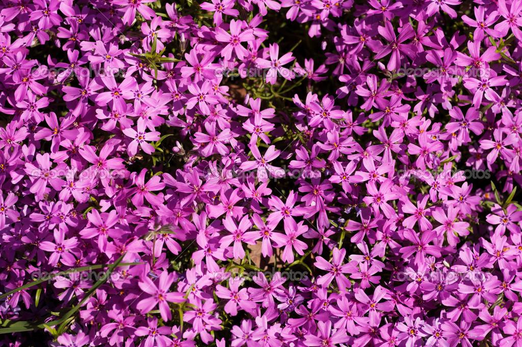 Flores De Colores Pequeñas
