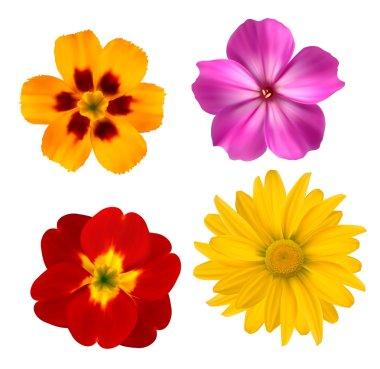 Big set of beautiful colorful flowers. Design flower set 1. Vect