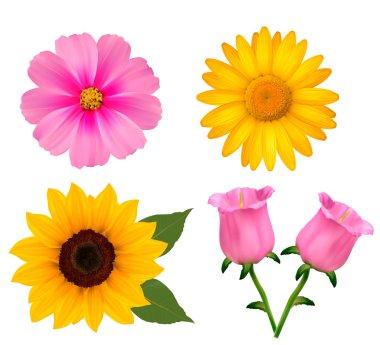 Big set of beautiful colorful flowers. Design flower set 2. Vect