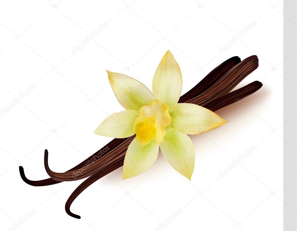 香草豆荚和花卉。矢量插画