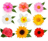 Photo Set of beautiful flowers. Vector illustration.