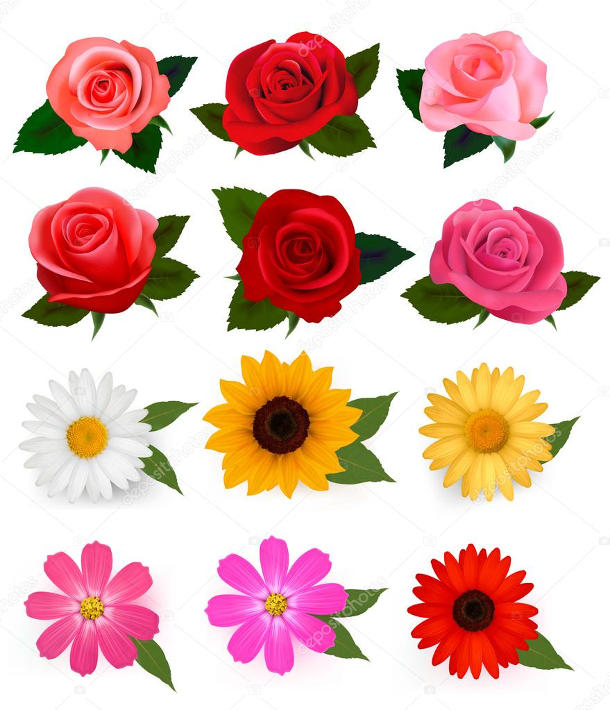 big set of beautiful colorful flowers vector illustration