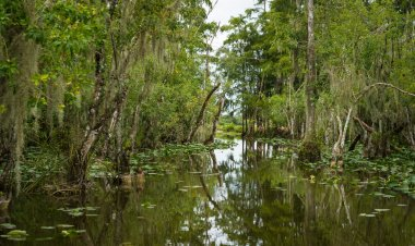 River in the Everglades