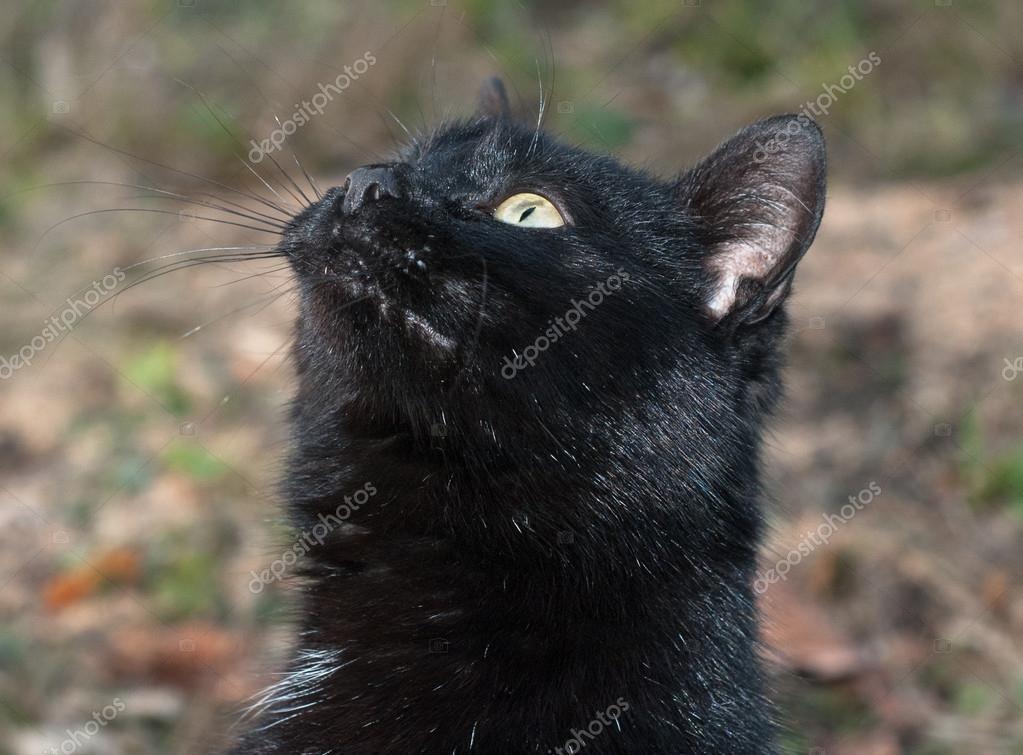 Obrázky mladé černé kočičky