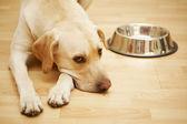 Fotografie hungriger hund