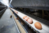 Fényképek Egg factory