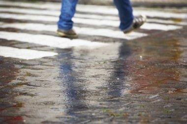 Zebra crossing in rain