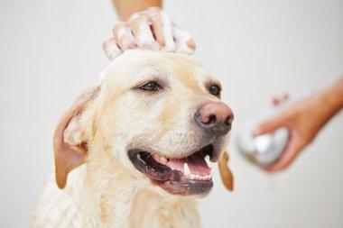 Dog in bathroom