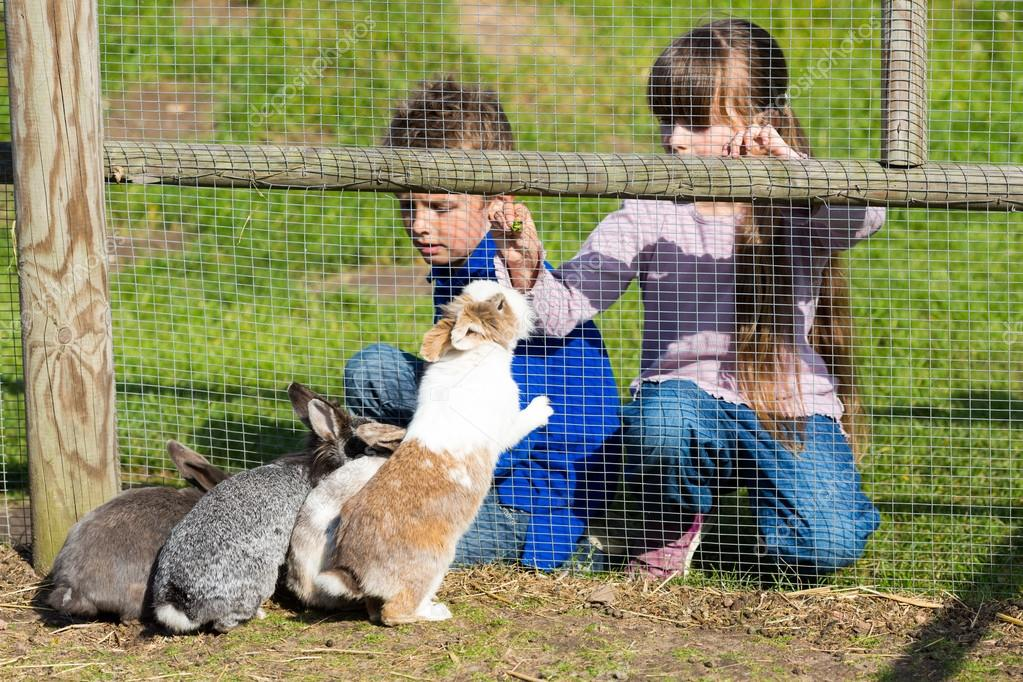 Artist young girl feeding rabbits — img 6