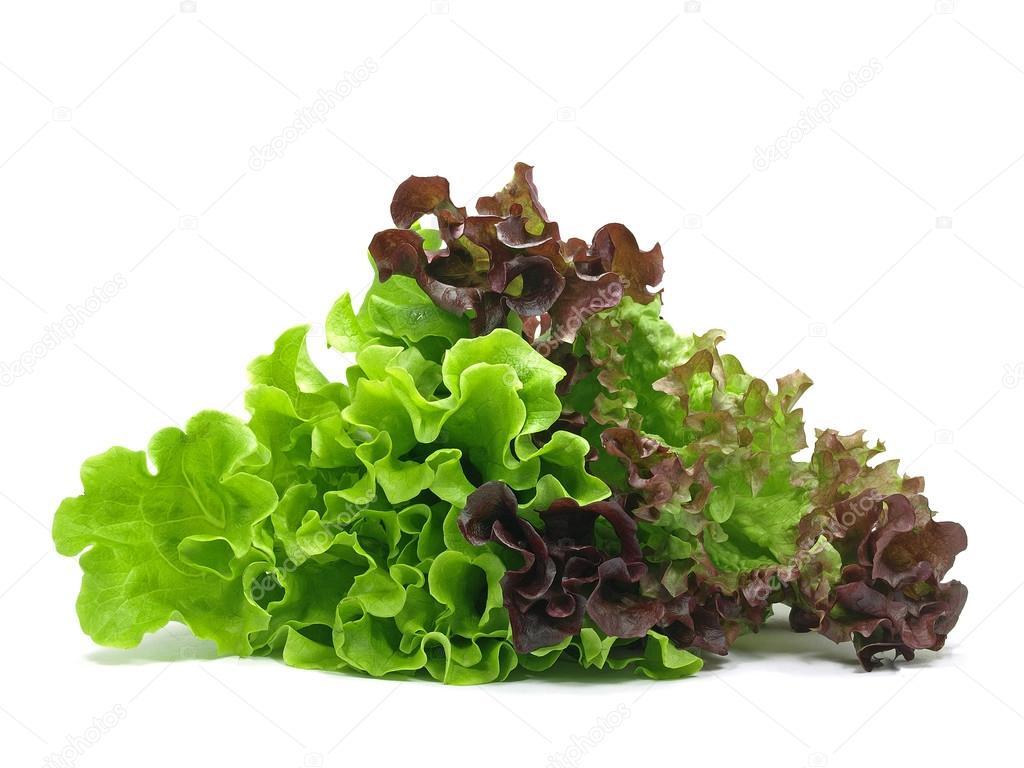 lollo rosso und batavia salat stockfoto rebabor 22941816. Black Bedroom Furniture Sets. Home Design Ideas