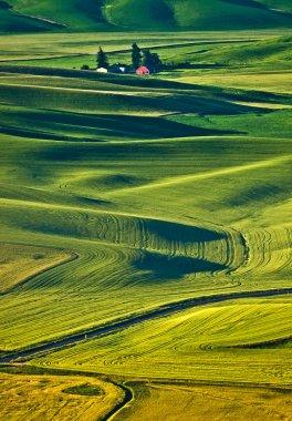 Endless wheat fields at Palouse region, Washington