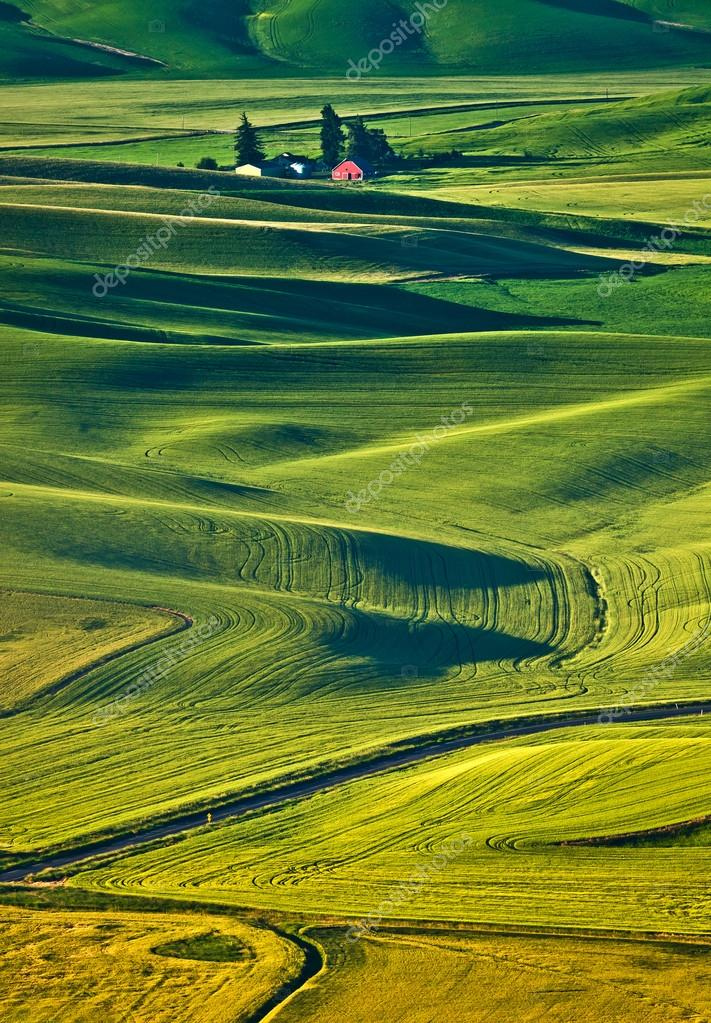 Endless wheat fields at Palouse region, Washington