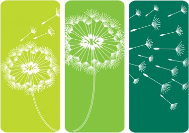 color vector illustration with dandelion