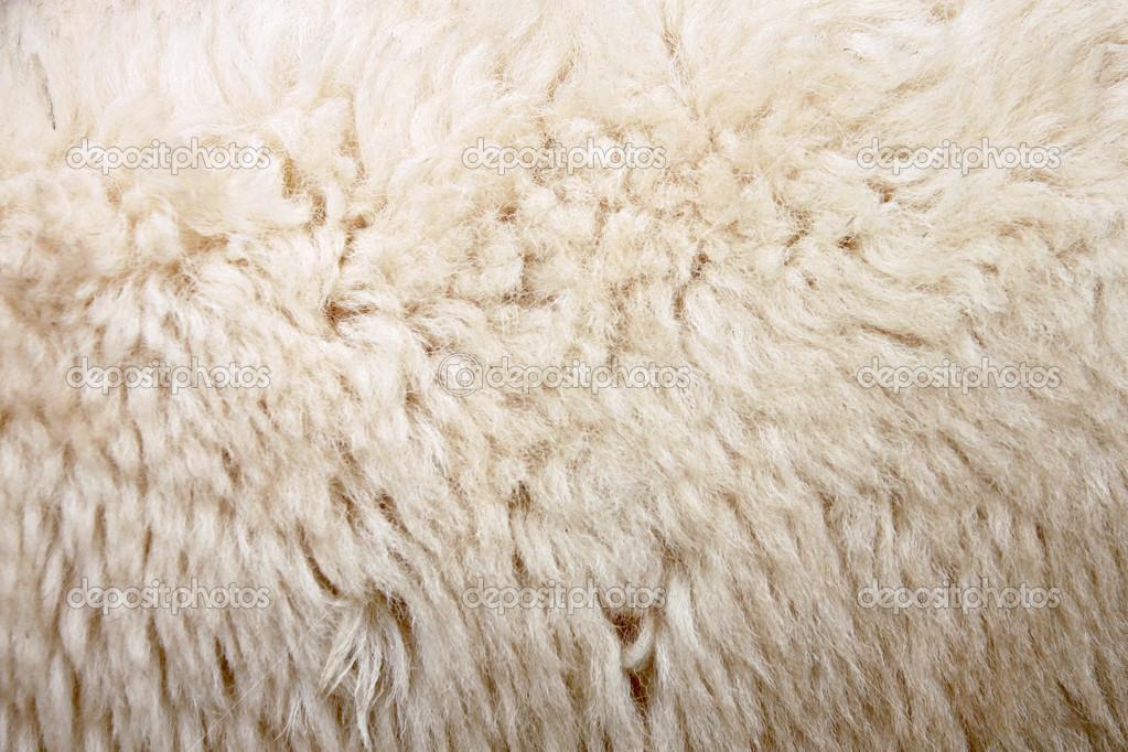 lana di zoom di pecora — Foto Stock © meepoohyaphoto  30177871 d1b6b415a793