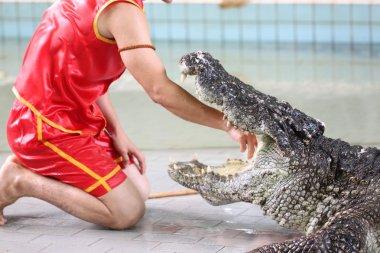 Show to catch crocodiles.